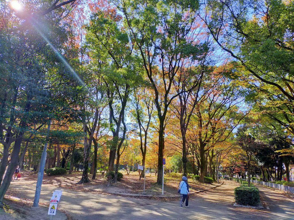 名城公園の紅葉 木漏れ日