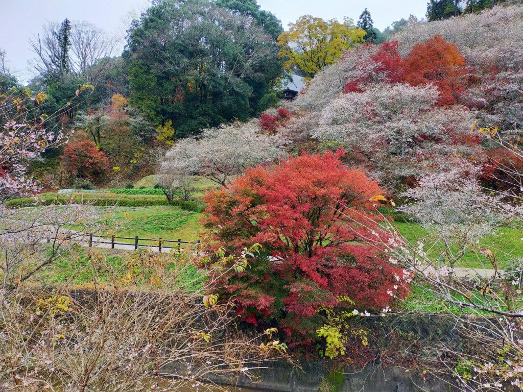 四季桜まつり